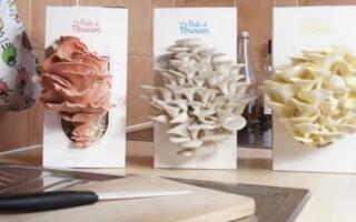 """法国:""""神奇""""菌盒 十天时间即可吃到新鲜蘑菇"""