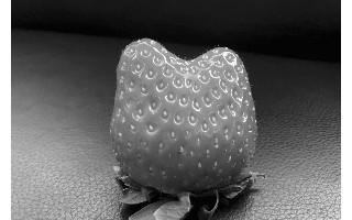草莓长得像凯蒂猫 专家:没使用膨大剂,可以放心吃