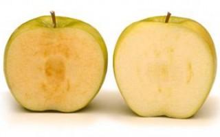 转基因苹果即将上市:三个星期内都不会变褐色