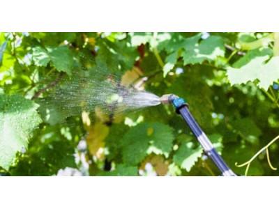 美国推出防控葡萄粉蚧新产品:施用方便,成本低