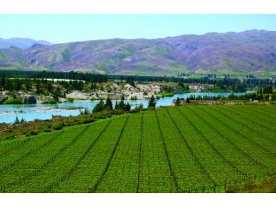 葡萄产量下降或导致新西兰葡萄酒出口增长放缓