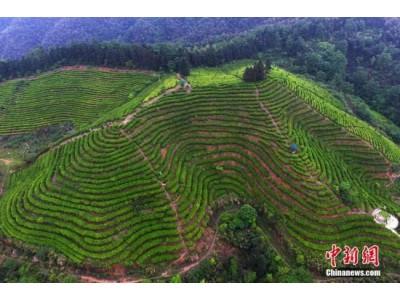 农业部:减少全国果菜茶产区化肥用量