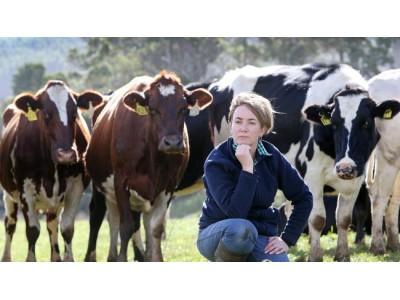 加大澳洲足迹 恒天然公布高价出栏牛奶价格