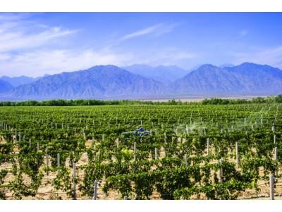 """中国16个酒庄将被授予""""酒庄葡萄酒""""证明商标"""