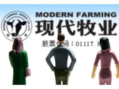 现代牧业亏损暴露大规模养殖隐患