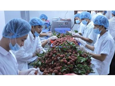 越南对许多市场出口荔枝