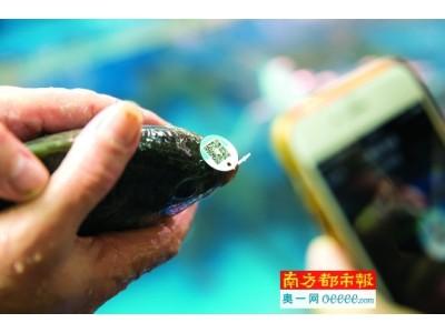 """广州超市淡水鱼有了""""身份证"""""""