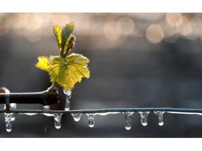 2017法国葡萄酒产量预计降17% 跌至历史新低