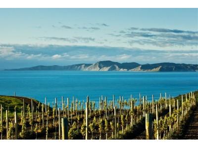 新西兰重要产区申请地理标志标签认证