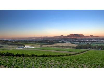 南非新增开普敦大区葡萄酒产地