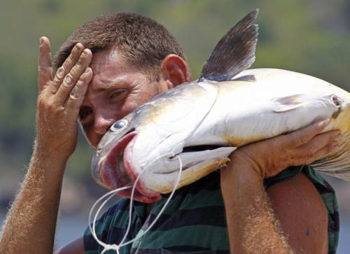亚洲鲤鱼泛滥成灾 美国密歇根州悬赏70万美元求妙招