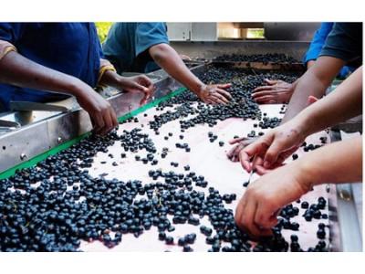 2017年澳大利亚葡萄压榨量和价格均上涨