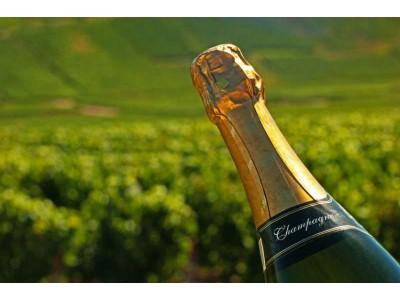 2017年香槟可销售产量不变,但销量上涨