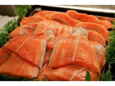 美转基因三文鱼上市前24年,中国就培育了世界首批转基因鱼