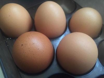 欧盟三国通报鸡蛋和蛋制品检出氟虫腈问题