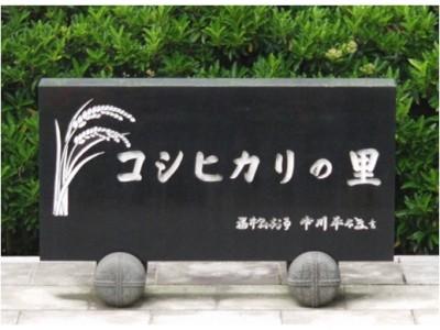 日本福井县新大米上市 米价平稳得益于大米政策