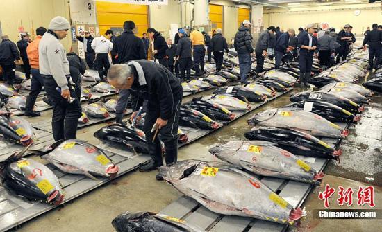调查显示日本各地水域四成鱼体内检出微塑料垃圾