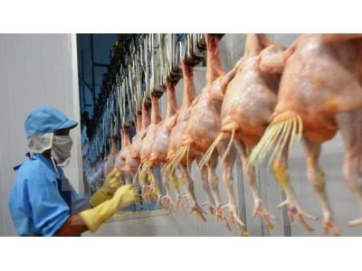 越南首批鸡肉将于9月9日出口日本