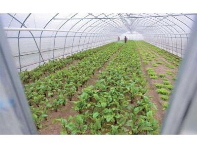 以假充真!上海知名有机蔬菜品牌掺假被罚50万