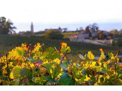波尔多葡萄酒酒精度不断攀升?全球变暖并不是借口