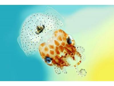 章鱼也是天然转基因?北大研究人员:其变色基因或源自细菌