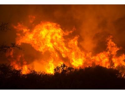 纳帕谷索诺玛发生严重森林大火 葡萄酒行业损失惨重