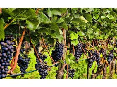 2017年美国葡萄酒行业创收2199亿美元