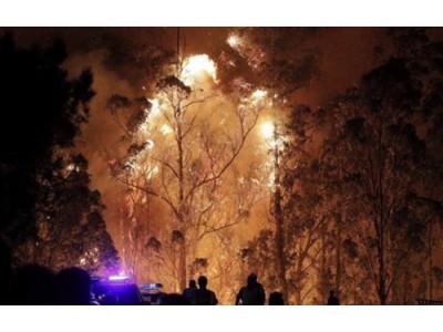 西班牙下海湾产区遭遇森林大火