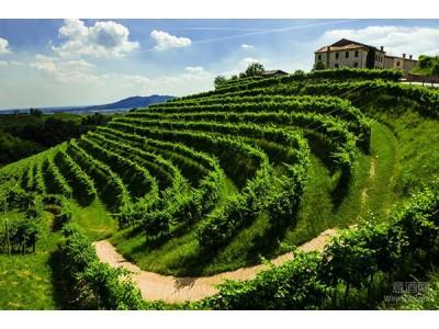 Prosecco Conegliano Valdobbiadene普洛塞克DOCG产区2017年减产10%但品质优良