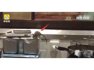 """触目惊心!上海中山公园龙之梦""""仰望包脚布""""现大量老鼠"""