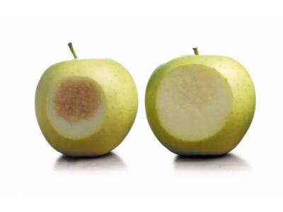 转基因苹果在美国上架,消费者反应有待观察