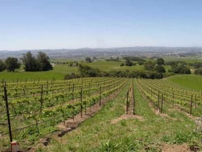 美国新增AVA法定葡萄种植区:佩塔卢马峡谷