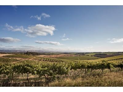 澳葡萄酒局与CSIRO投3700万研发新型酿酒葡萄