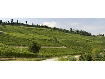"""艾劳迪总统酒庄新收购1.5公顷Barolo产区顶级葡萄园 """"剑指""""年产Barolo10万瓶"""