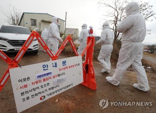 韩禽流感疫情防控亮红灯 江原道检出禽流感病毒