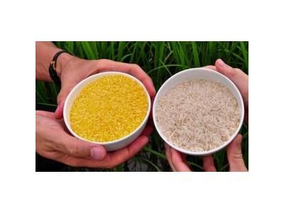 澳新批准黄金大米用于食品:混入进口稻米时不再被退运或销毁