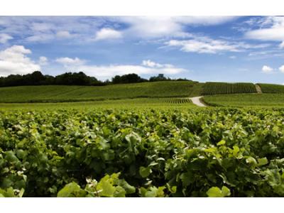 2017年世界葡萄及葡萄酒生产及流通报告
