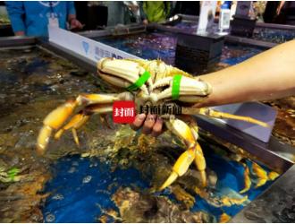 成都盒马鲜生螃蟹也绑橡皮筋 消费者:可以接受