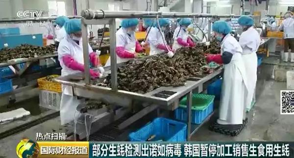 韩国生蚝被诺如病毒入侵,已流通到当地各餐厅和超市