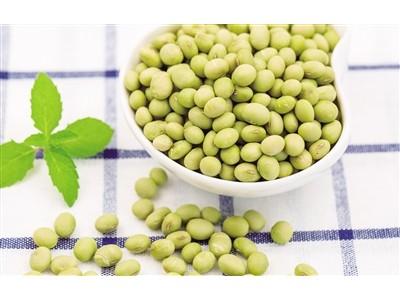 中国科学院东北地理所培育出突破性大豆新品种