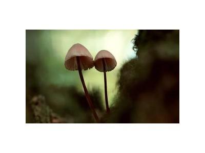 伊朗近期超800人因食用野生蘑菇中毒 11人死亡