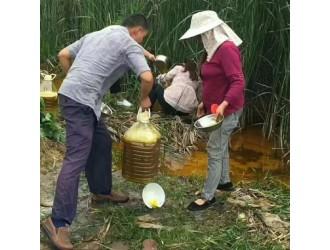 """事发湖北团林!农田水沟惊现大量菜籽油,引发村民""""抢""""油!"""