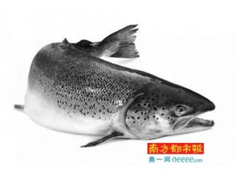 你吃的到底是不是三文鱼 类专家揭开大西洋鲑和虹鳟的真相