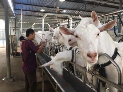 纯羊奶粉遭遇乳清瓶颈 羊乳清国产后能否破局