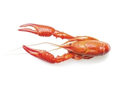 为世界杯助兴的小龙虾 竟被谣传成哈夫病罪魁祸首