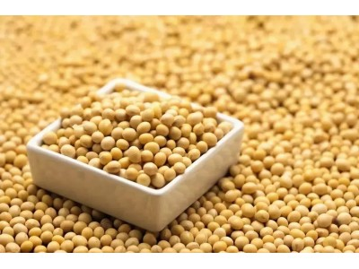 下月起 中国0关税从部分亚太国家进口大豆