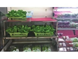"""""""活体蔬菜""""高价叫卖,噱头还是摆设?"""