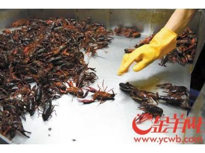 深圳抽检十款本地热门小龙虾 八款检出微量重金属