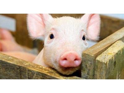 近期疫情频发:中国首次发生重大非洲猪瘟疫情,多地发现炭疽疫情