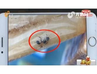 """山东滨州一女士购买""""米多奇""""烤馍片 包装里惊现多只死蚂蚁"""